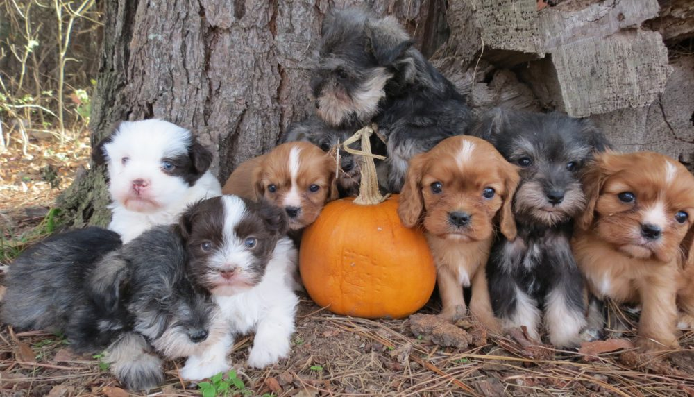 Bearfoot Puppies